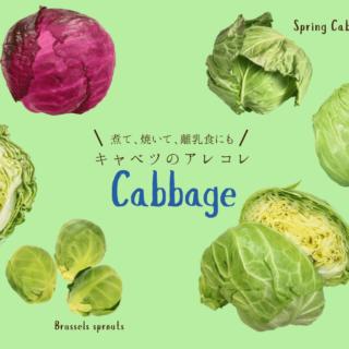 cabbage01